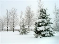 Winter Scene Image