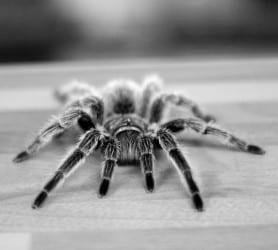 Spider Terror Image
