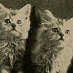 3 Count: Public Domain Cats