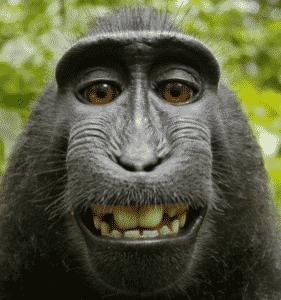 Monkey Selfie Image
